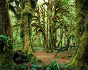 Green-Forest-Wallpaper-green-20036585-1280-1024